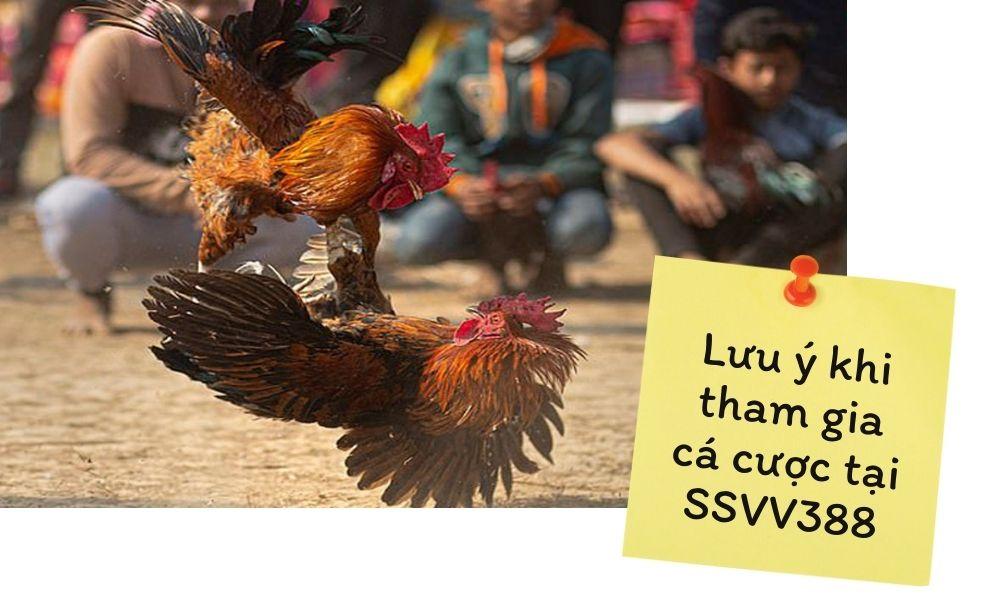 Lưu ý khi tham gia cá cược tại SSVV388